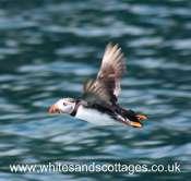 Pembrokeshire Wildlife_1