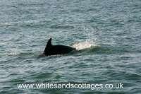 Pembrokeshire Wildlife_4